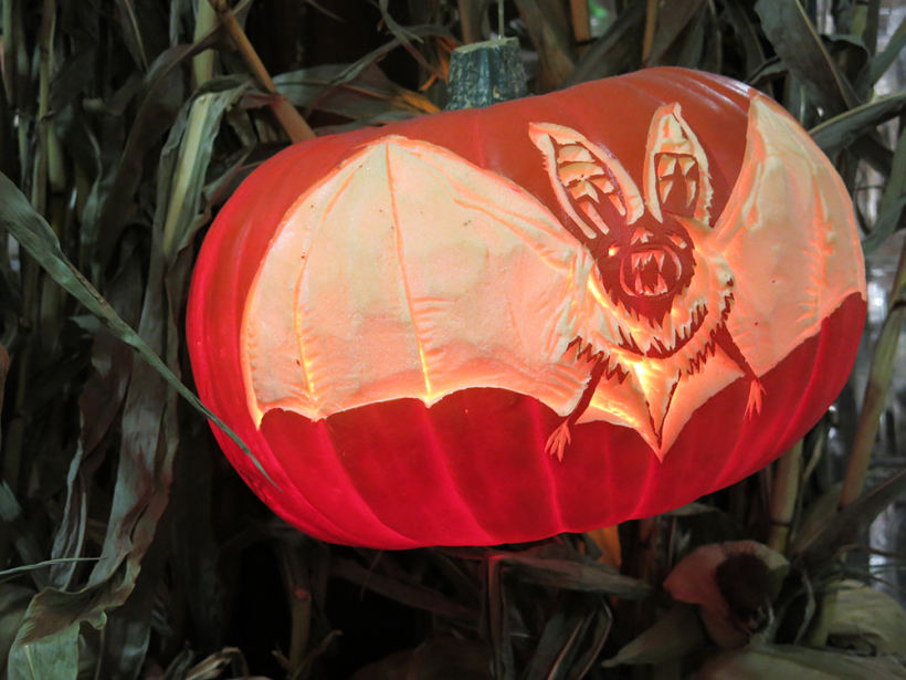 Bat wing curiosity pumpkin